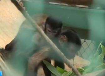 """俄罗斯一动物园出现""""婴儿潮"""",猴子羊驼驯鹿都生娃了"""