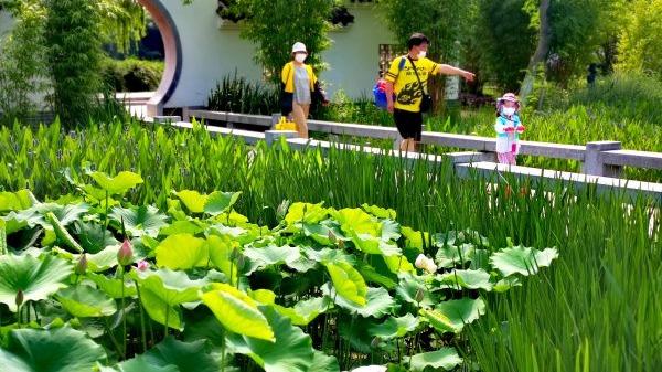 金银湖湿地公园姹紫嫣红