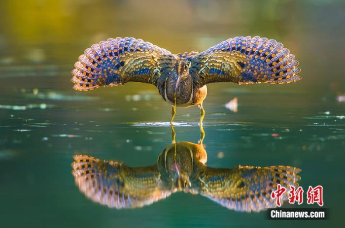 """福建有个""""鸟的天堂"""""""