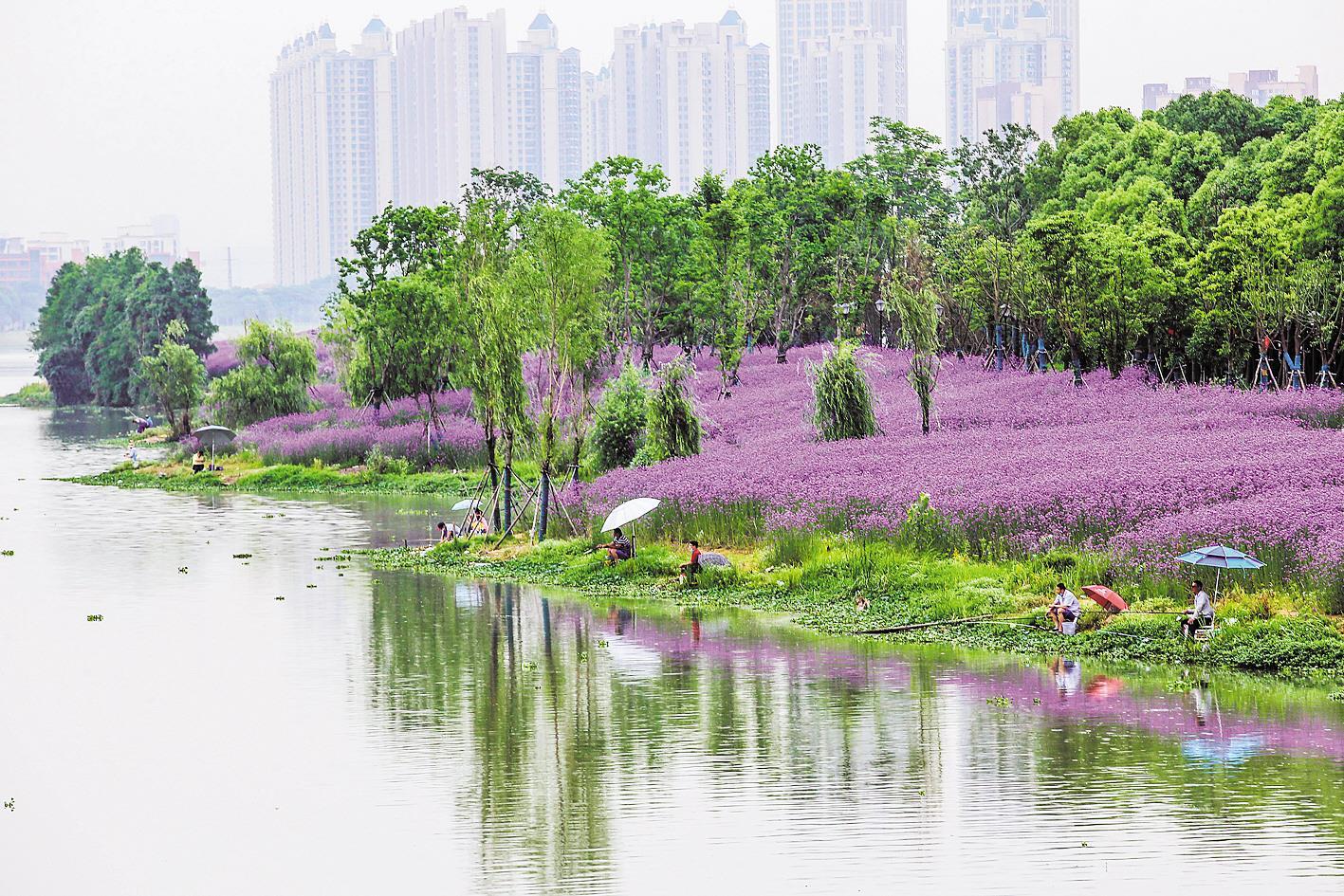 武汉径河公园紫色迷人