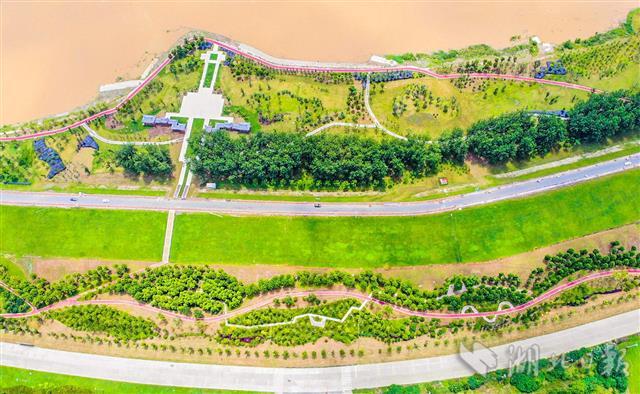 生态景观带扮靓荆江大堤