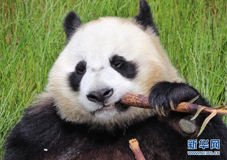 四川九寨沟大熊猫园开园迎客-荆楚网-湖北日报网