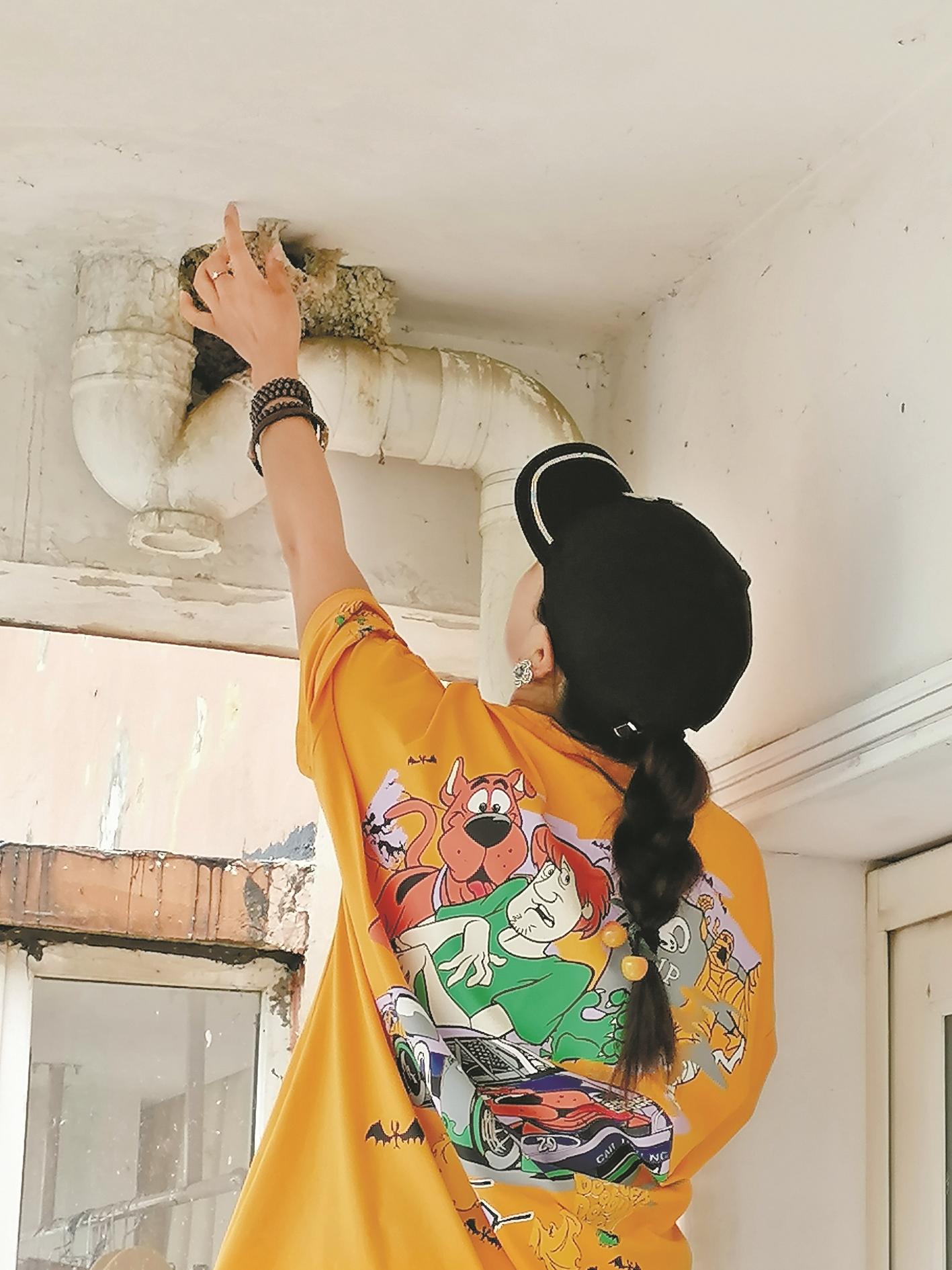 利川女子不封阳台为燕子留路 8年来  燕儿在她家阳台安家繁衍快乐生活