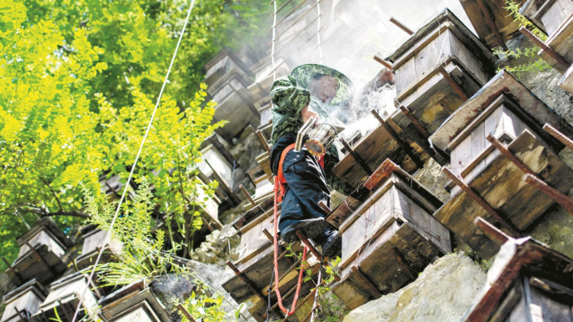 神农架养蜂人峭壁探蜜