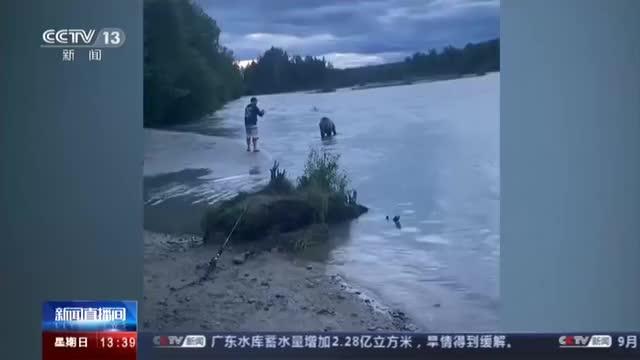 渔夫钓上鲑鱼 被野熊一把抢走