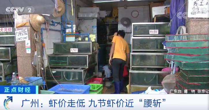 """急跌!国产虾价格""""对半砍"""",这是为虾米呢?"""
