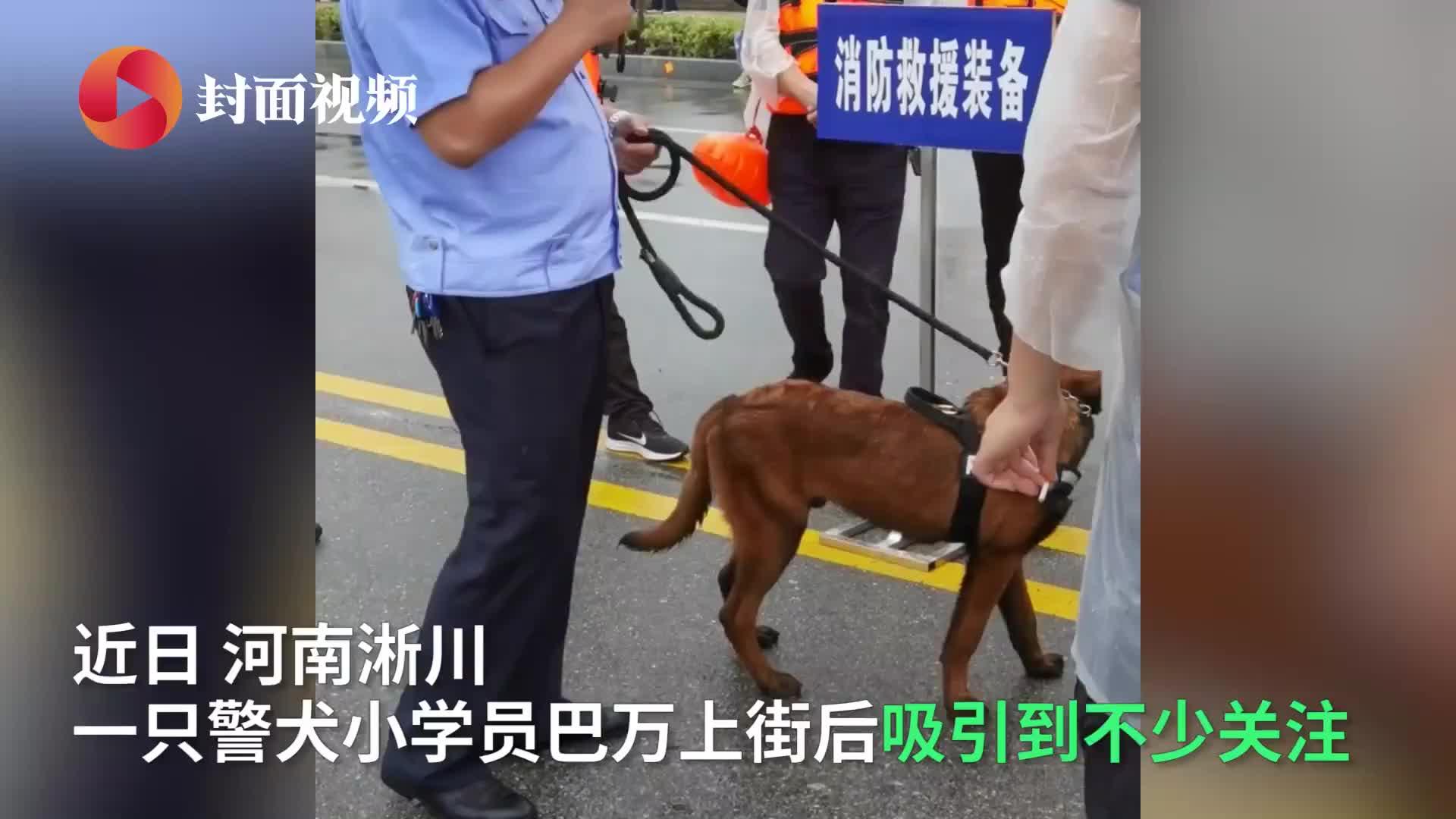 流浪犬凭实力成为警犬学员