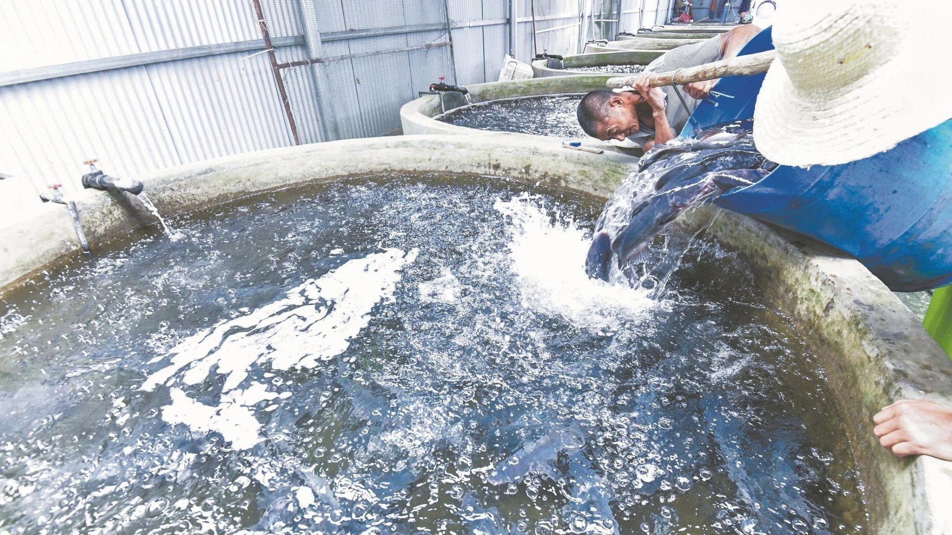 """养殖户忙保供 鱼儿带着""""鲜气""""游上市民餐桌"""