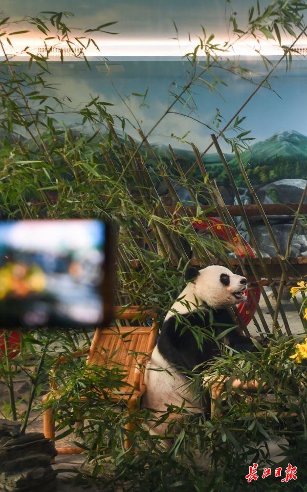 """为""""春俏""""5岁庆生,娃娃们知道了大熊猫好多""""隐私"""""""