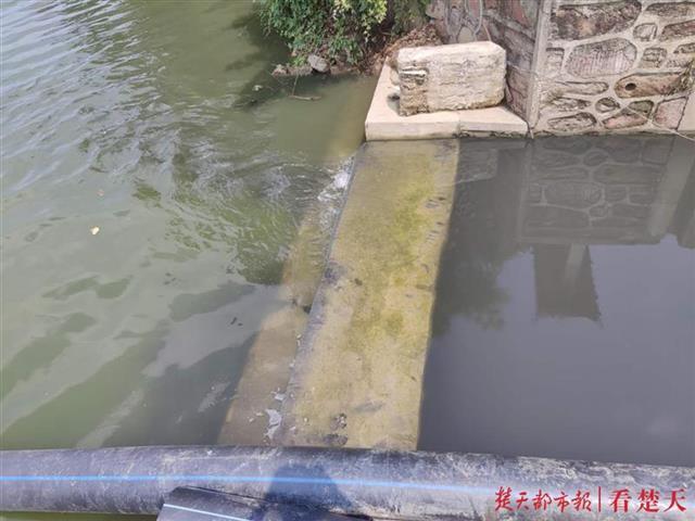 排水口内水体黑臭,相关部门称不会流入墨水湖