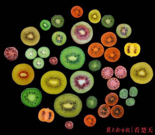吃过麻辣猕猴桃吗?武汉植物园招募试吃员啦!