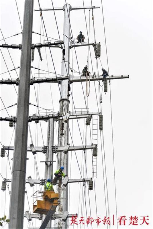 雨中高压电缆上除了鸟儿,还有他们……