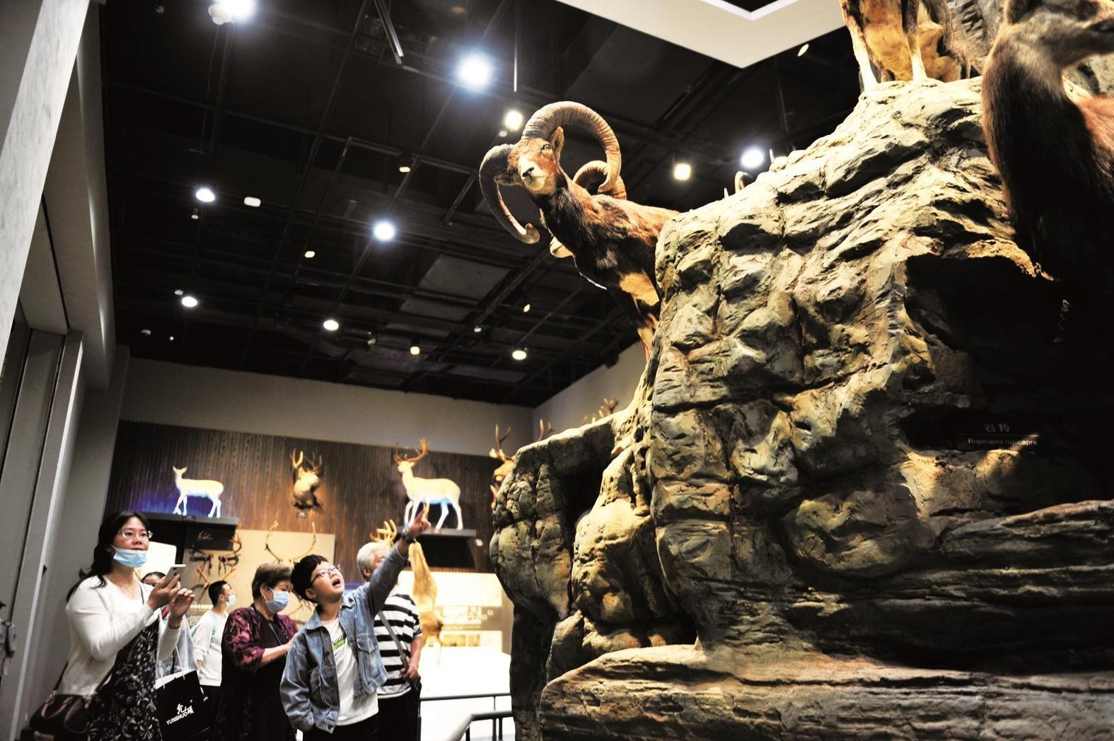 闭馆8个月后,宜昌博物馆恢复开放,团队预约暂不受理