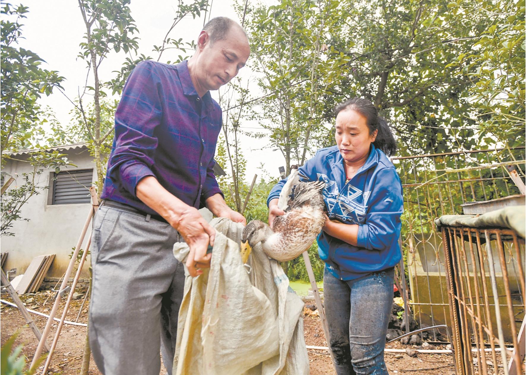陈腊平(左)和员工在农场忙活