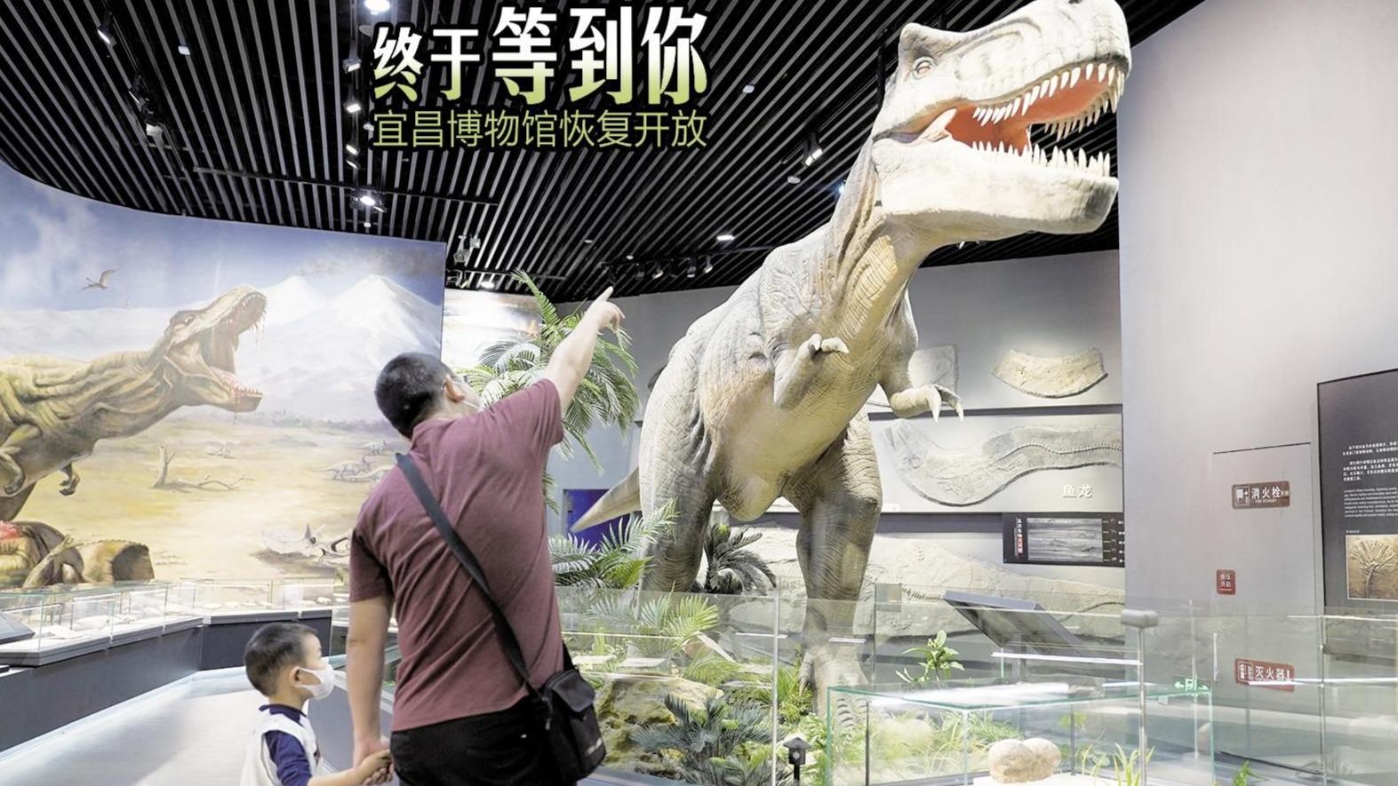 宜昌博物馆恢复开放,团队预约暂不受理