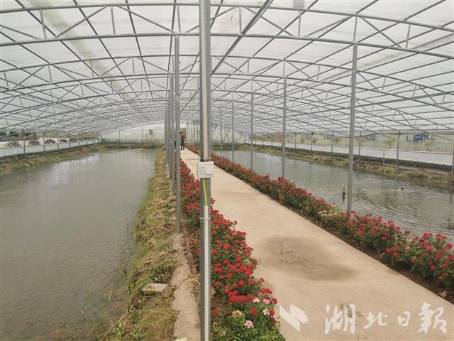 湖北省垦区累计建成360万亩规模化基地