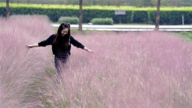 武汉郁金香主题公园2020年秋季百花展开幕