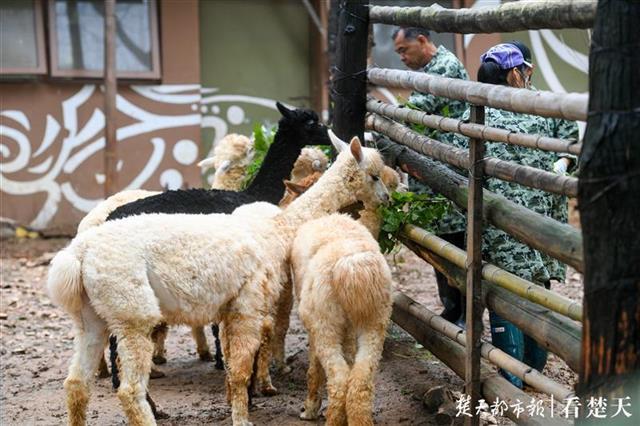 华中最大野生动物园开建 年底前有望去看这里的野生动物
