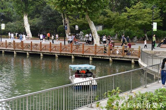 """中山公园人工湖现水底""""森林"""""""