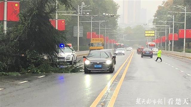 长江大桥汉阳桥头大树突然倾倒 8时50分路面交通恢复正常