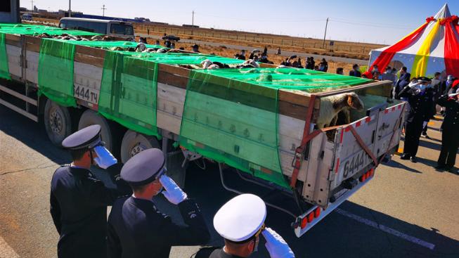 中蒙举行蒙古向中国捐赠羊交接仪式