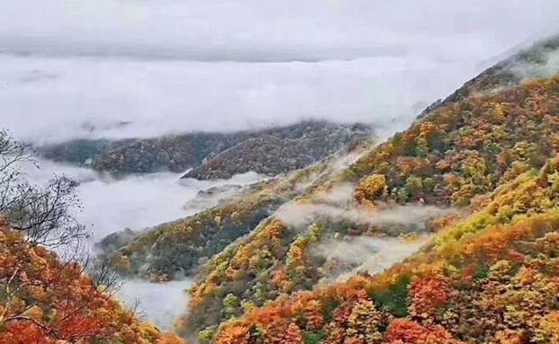 一山红叶,一山雪,1946伟德国际手机客户端这个地方太美了……