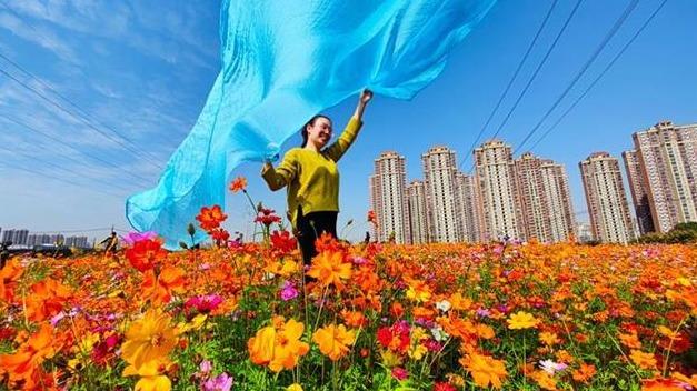 江城斑斓花海,十里香不断