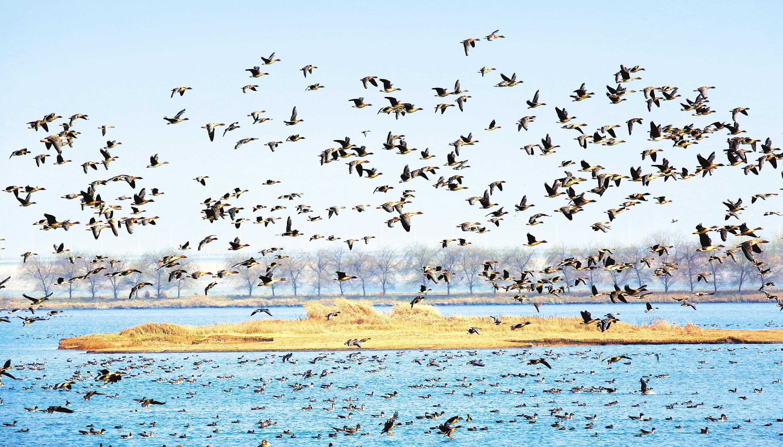 好生态引来候鸟聚集