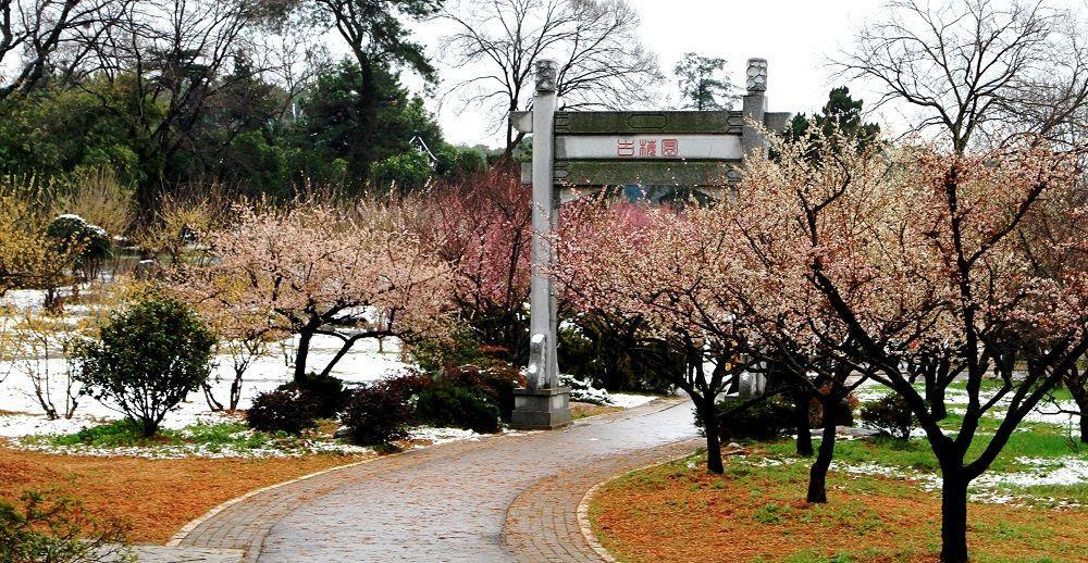梅园赏花路线来啦  带你看遍梅园十景