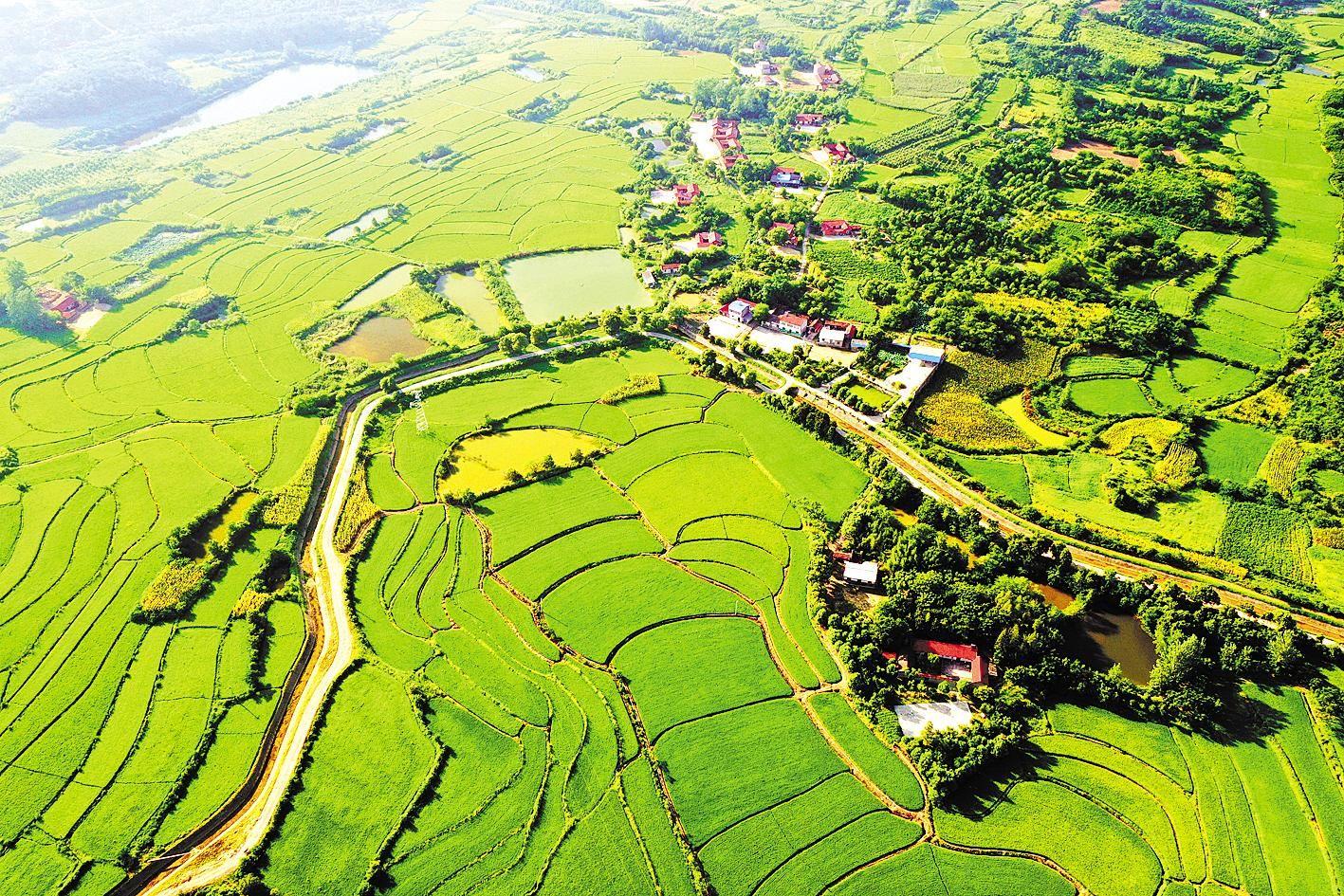 荆门8万亩耕地纳入积分制管理