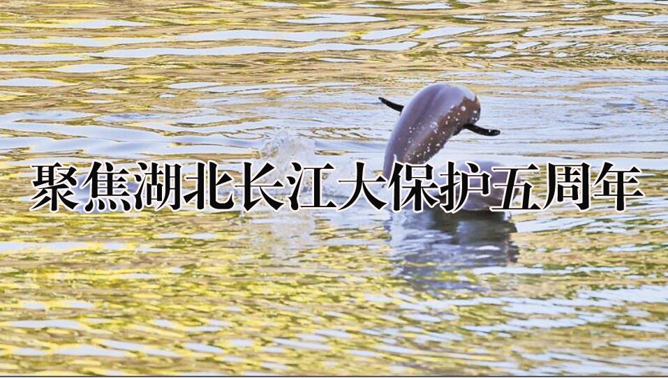 聚焦湖北长江大保护五周年