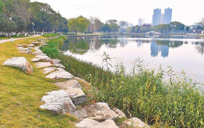 70岁紫阳公园生态改造归来