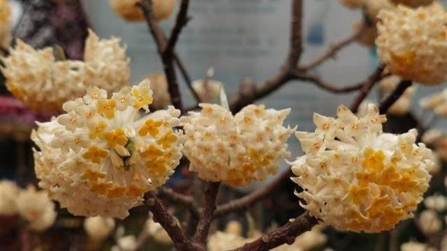 朵朵花儿踏春来 植物学者教你认花