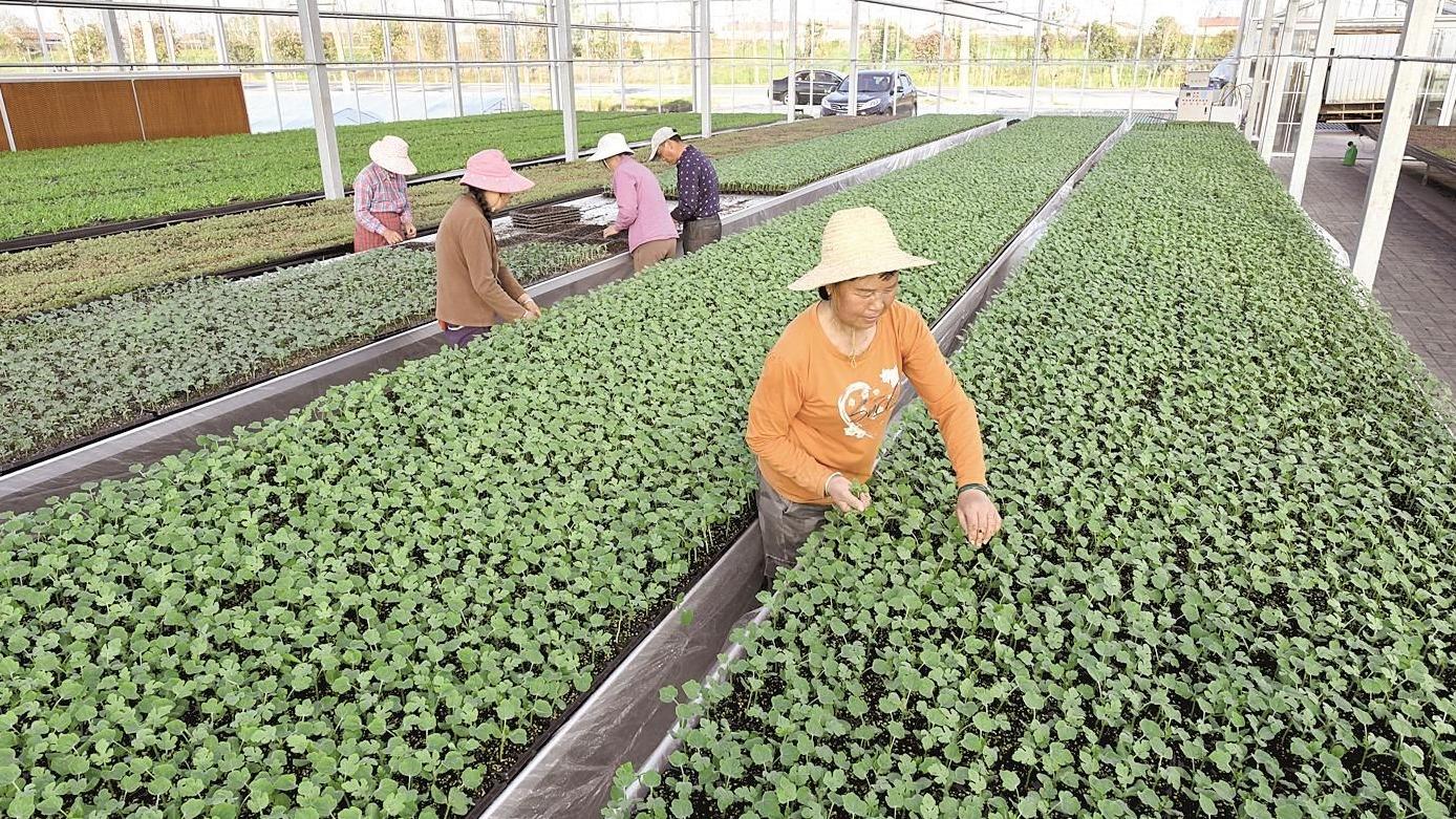 赤壁培育特色产业示范村132个