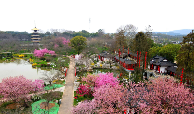 东湖樱园樱花开啦 | 图集