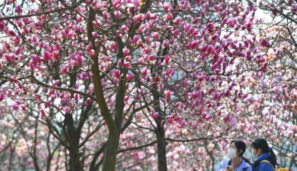姹紫嫣红春满园