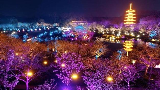 相约东湖樱花园赏夜樱