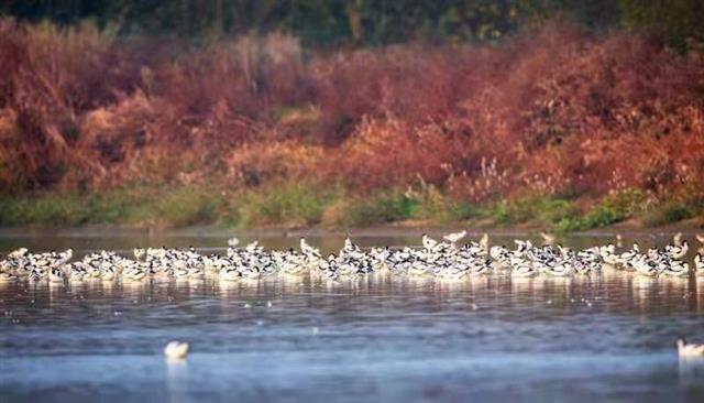 武汉三地纳入野生鸟类栖息地保护范围