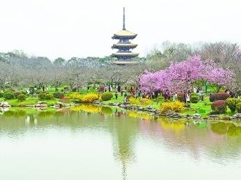 东湖赏樱旅游专线开通啦