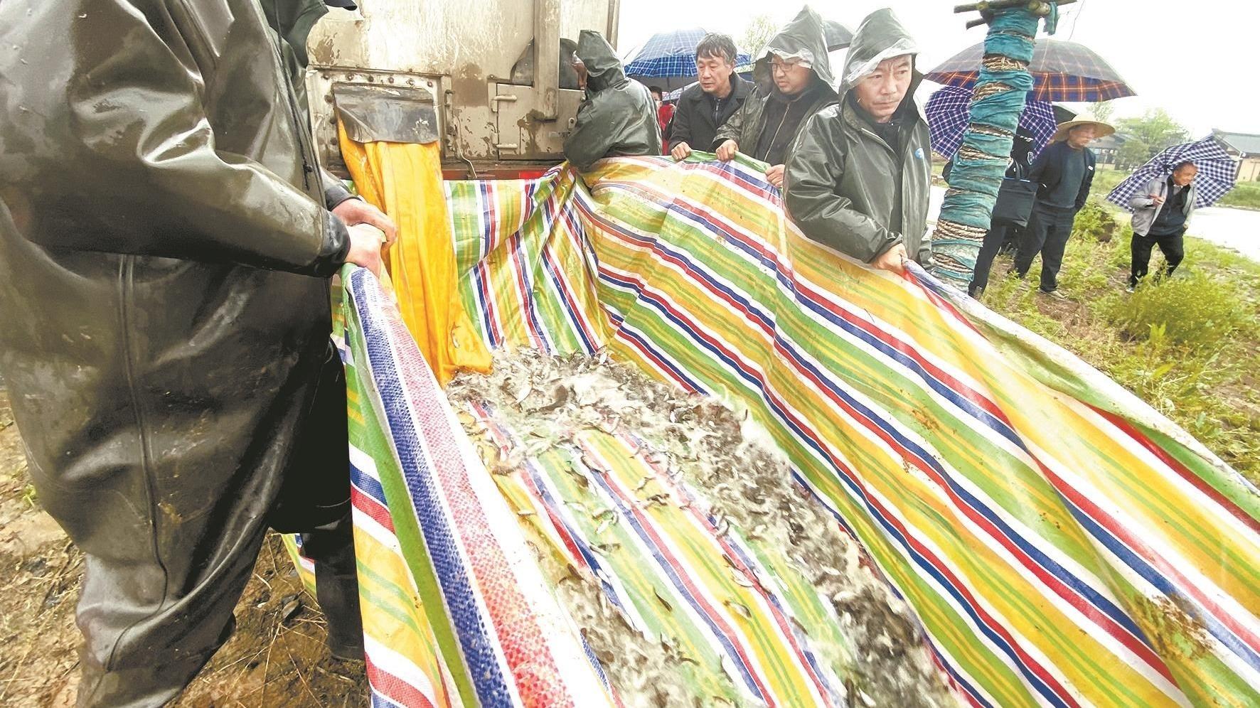 荆州长湖11年投放各类鱼3.55亿尾