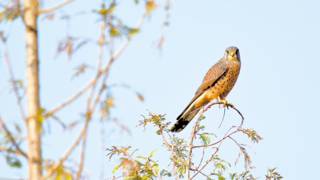 造访武汉的野生鸟类越来越多