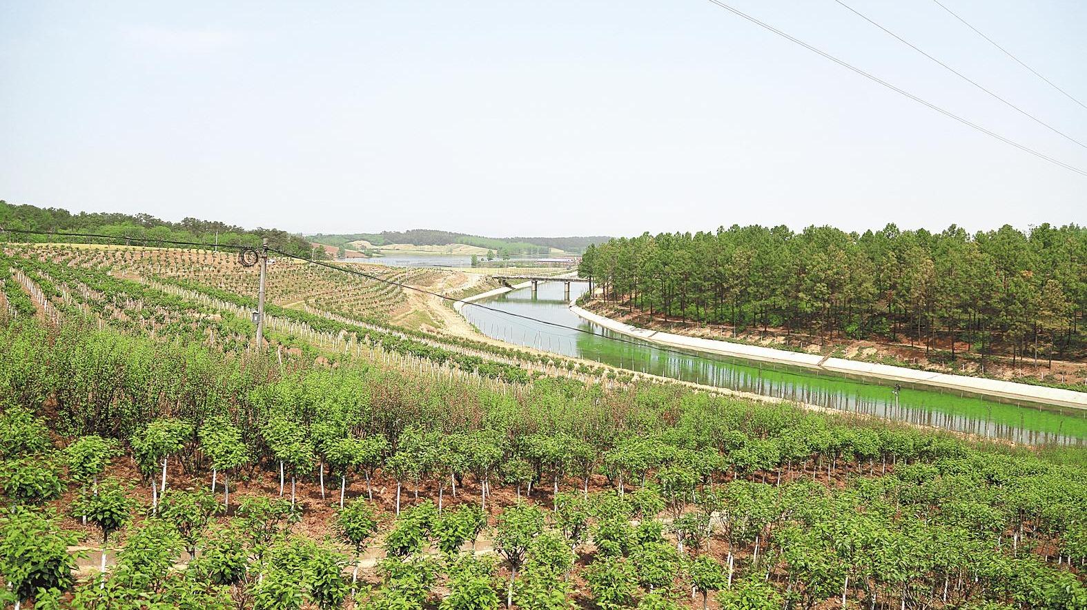 鄂北防护林3年增绿10万亩