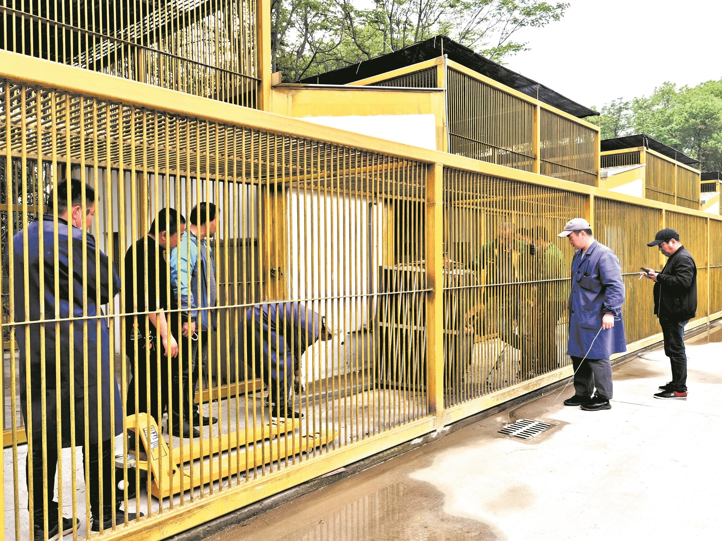 5只熊上演武汉动物园搬家压轴戏