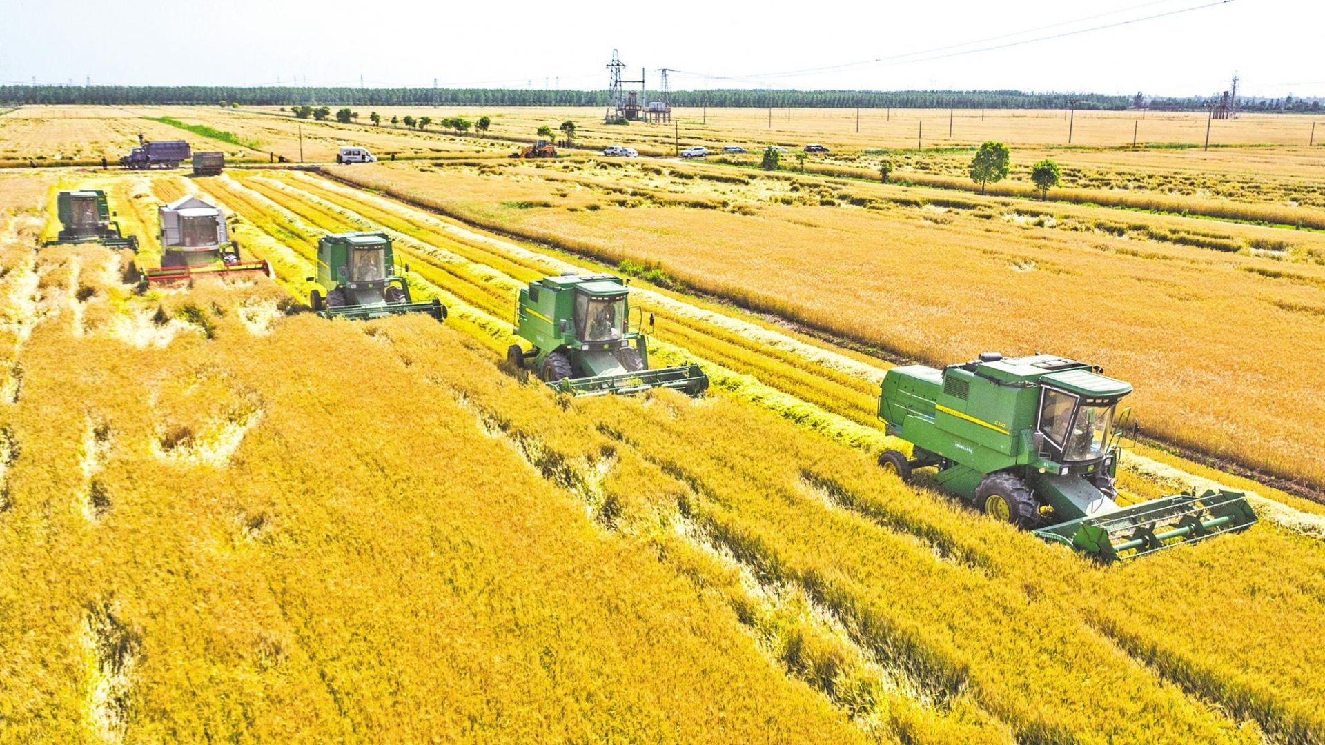 当阳:大麦夏收全面铺开