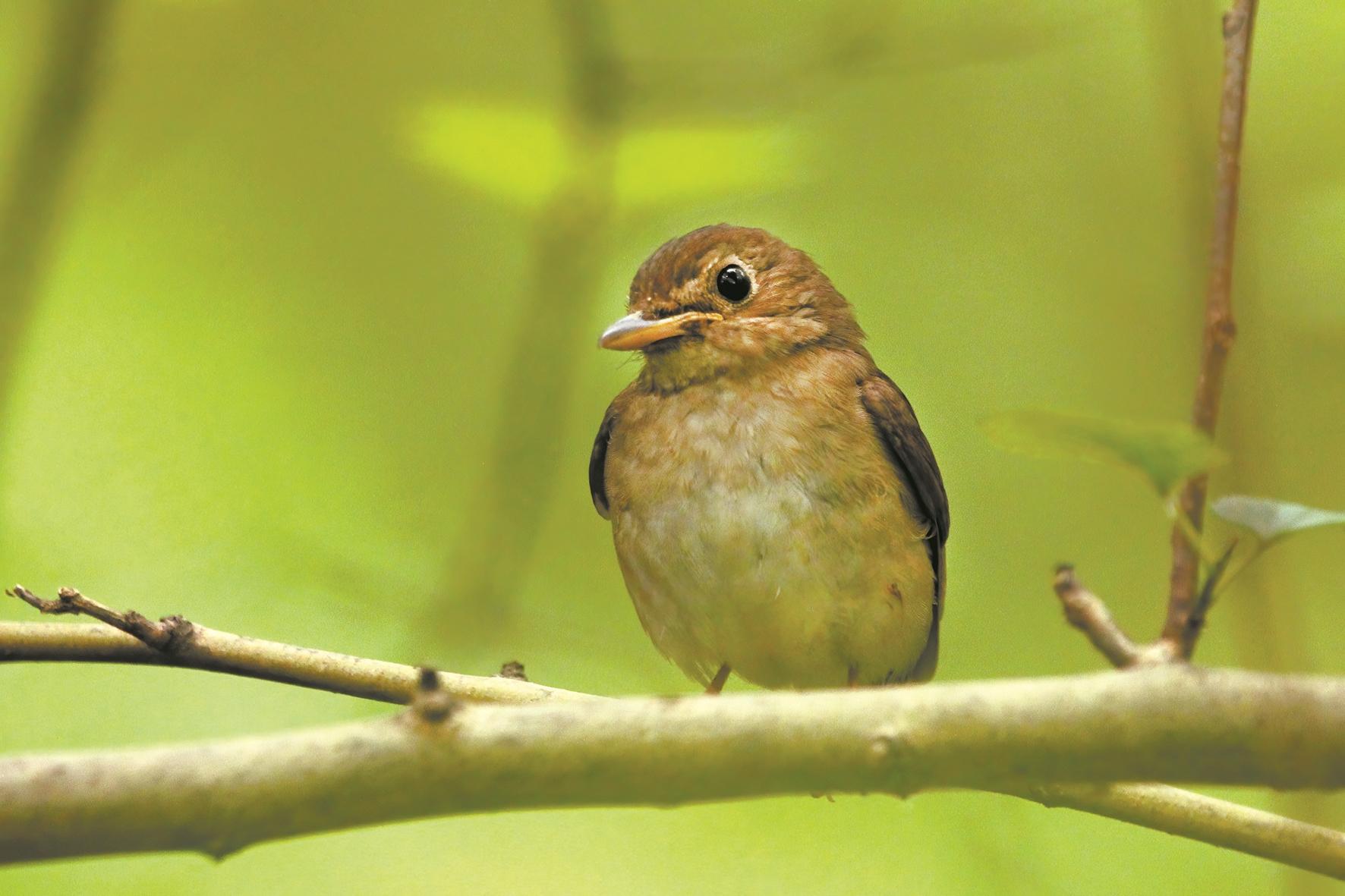 7种!今年武汉鸟类新记录为6年来同期最高