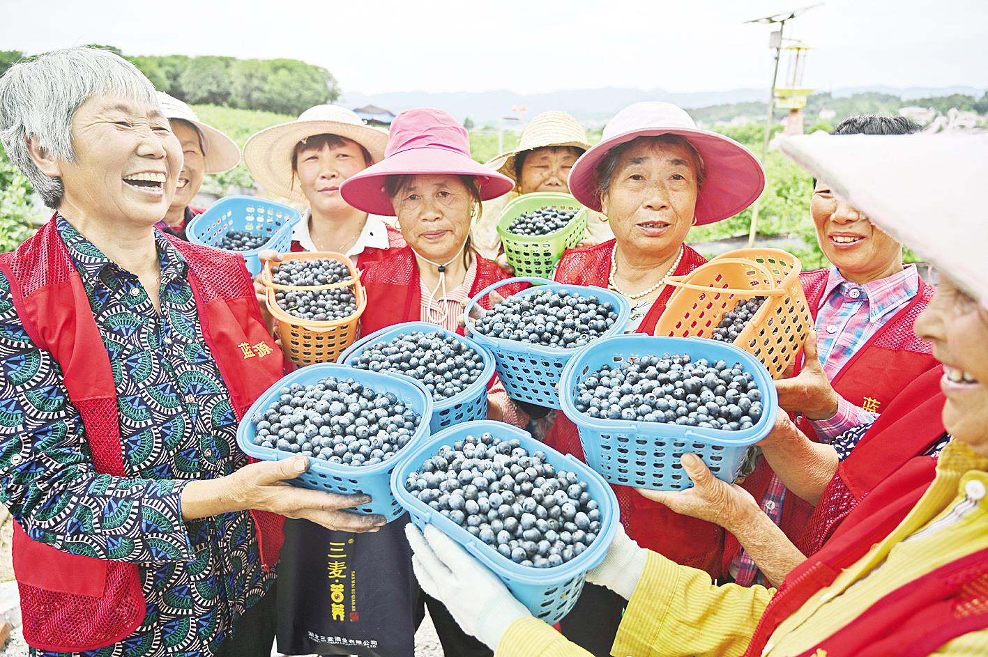 村頭藍莓園讓生活更美味