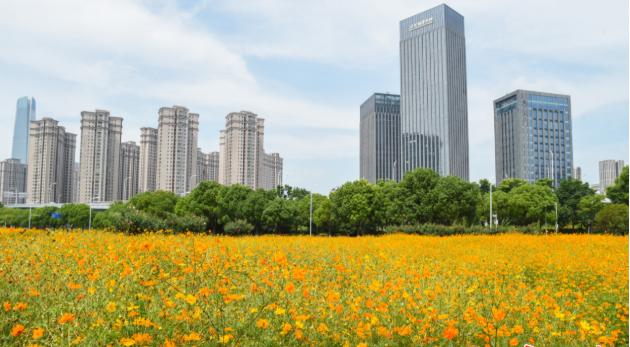 打造四季花城,武漢將迎來300公頃花田花海