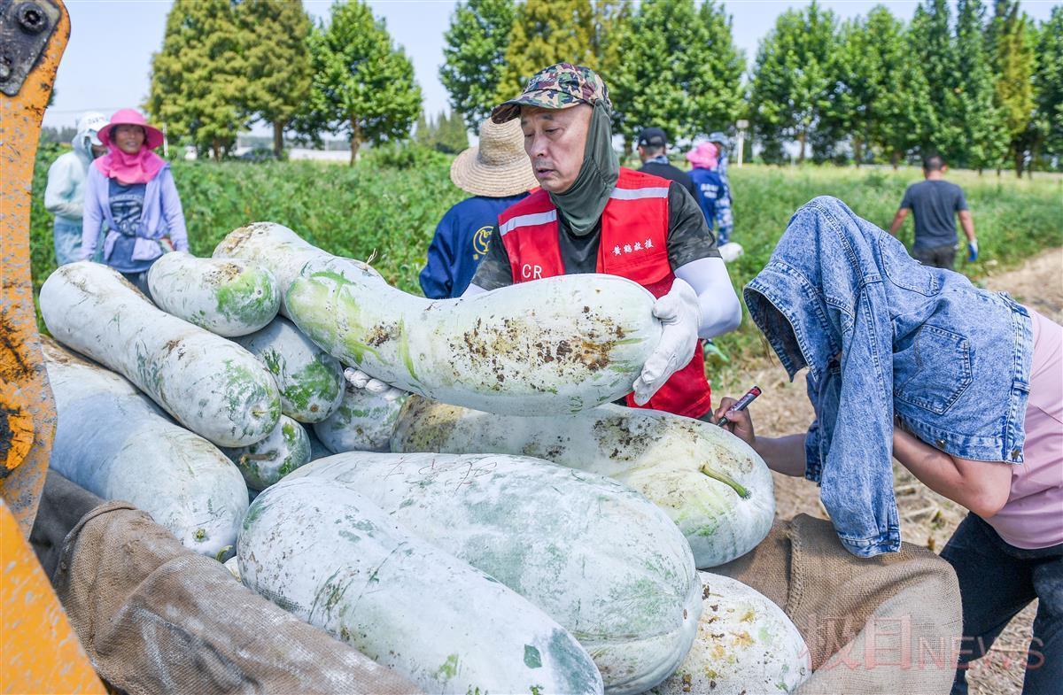 武汉爱心农户再捐三万斤冬瓜驰援河南
