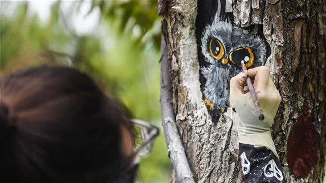 武漢西北湖公園3D畫點綴樹木創口