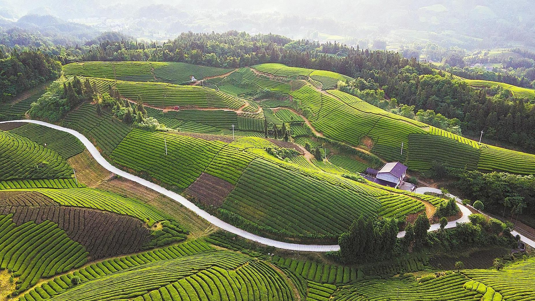 鶴峰:滿山紅 漫山綠